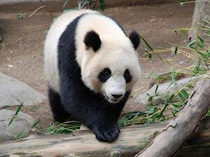Image for Google Panda Update